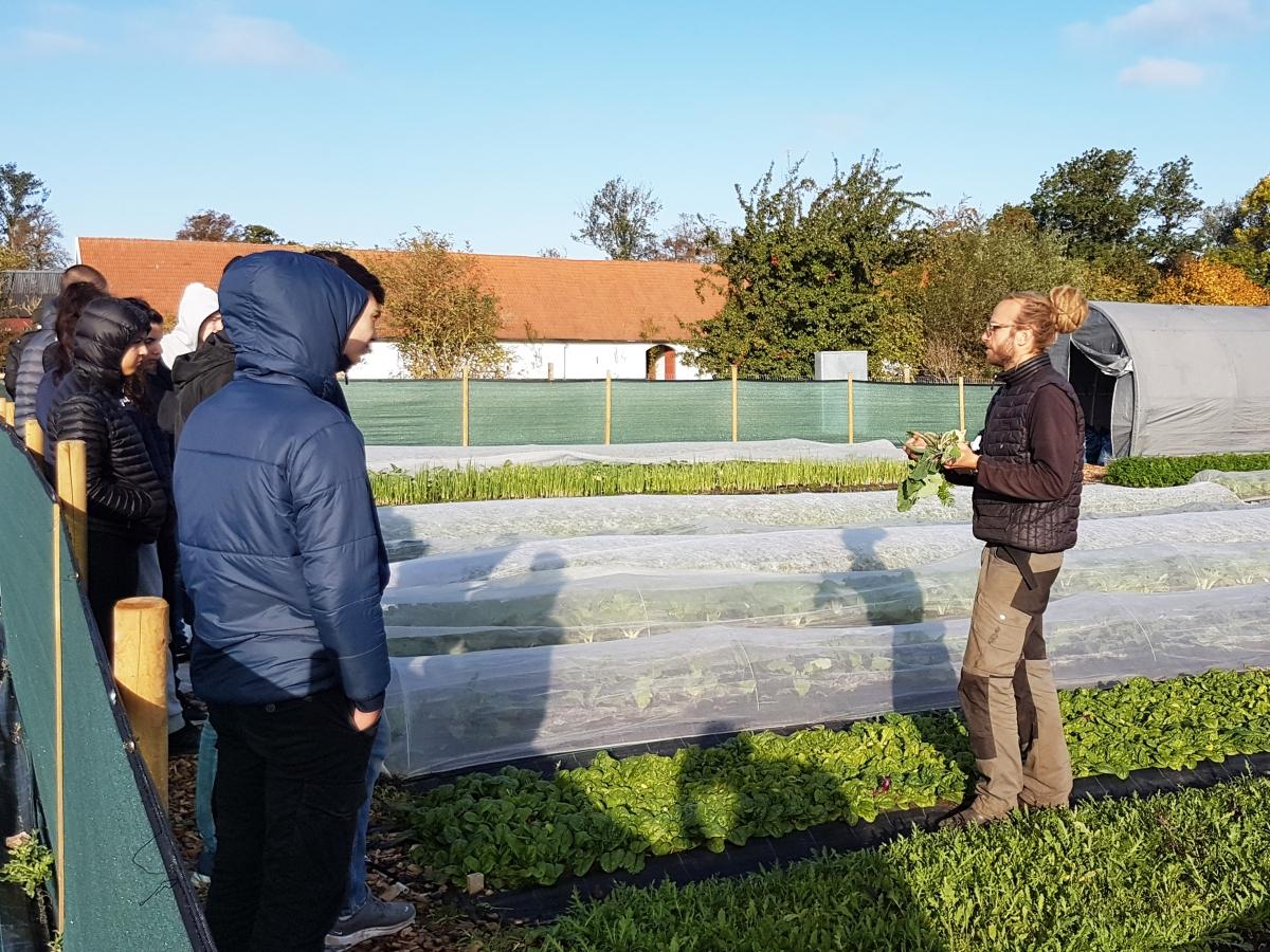Bild på när en producent på Vegostan berättar om verksamheten för ungdomarna. De står utomhus, mitt bland grönsakerna.